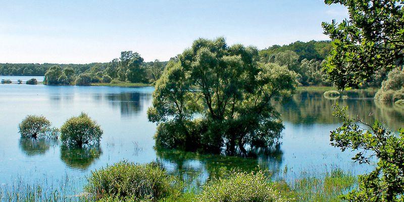 Lac de la forêt d'Orient